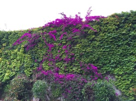 Garden wall in Nice
